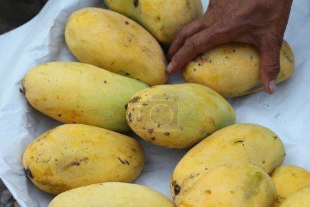 mango fruit at the market