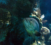 Barcelona v září, Španělsko, akvárium