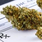 Close up of medical marijuana buds sitting medical prescription pad on black background