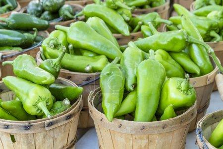 Fresh organic anaheim peppers in brown bushel bask...