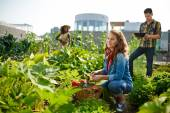 """Постер, картина, фотообои """"Дружная команда заготовки свежих овощей из сада на крыше парниковых и планирования урожая на цифровые таблетки"""""""