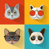 Animal Portrait Set with Flat Design - Cat Collection Vector Illustration