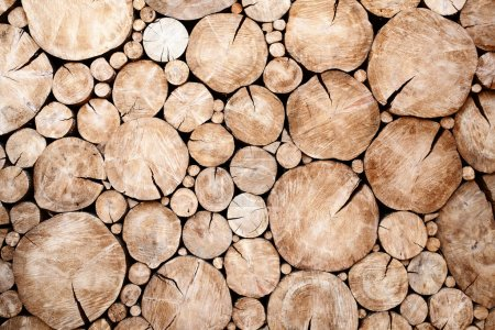 Photo pour Souches d'arbres fond Coupe d'arbres section Texture du bois tronc d'arbre coupé - image libre de droit