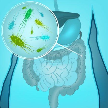Vector Bacteria Flora