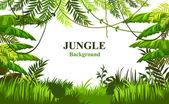 Letní pozadí s džunglí