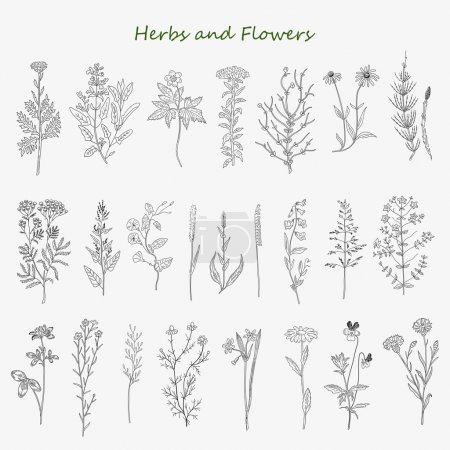 Illustration for Hand drawn herbs and flowers set of vector sketches. Vintage design with medicinal herbs and wild flowers illustration. - Royalty Free Image