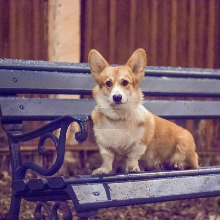 Dog sitting on a bench