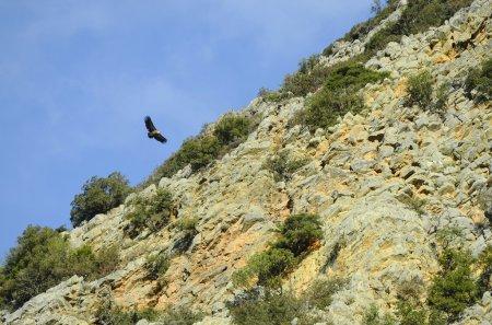Photo pour Grèce, Crète, frre vautour vivant - image libre de droit