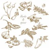 Kitchen herbs and spices set hand drawn vector illustration in sketch style