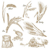 Wheat rye oats barley farm house in vintage style