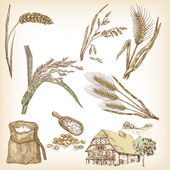 Cereals set Hand drawn illustration wheat rye oats barley rice farm house in vintage style