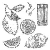Collection of highly detailed hand drawn lemones Vector