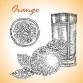Collection of highly detailed hand drawn orange