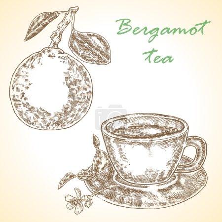Highly detailed hand drawn bergamot. Vector illustration bergamot