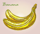 Highly detailed hand drawn banana Fruit vector illustration