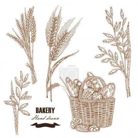 Cereals set. Hand drawn sketch illustration wheat, rye, oats, ba