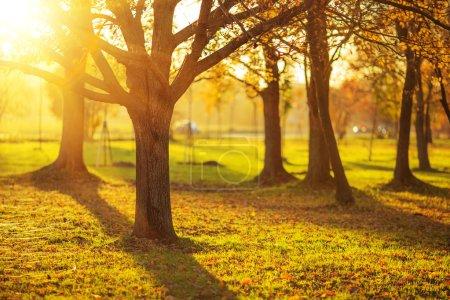 Picturesque autumn park