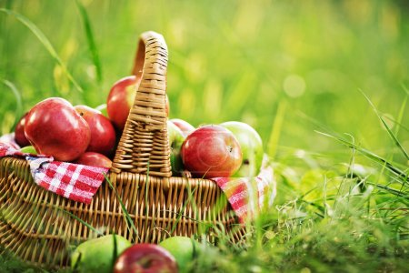 Rich organic apples in basket