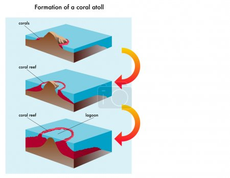 Coral atoll formation.