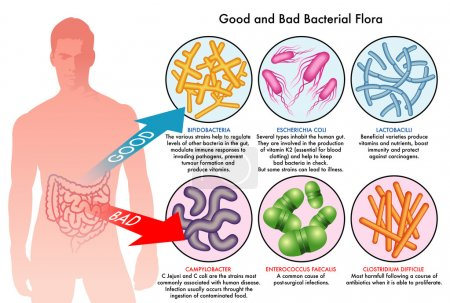 Good and bad bacteria infecting human