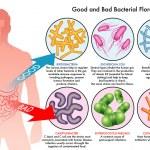 Good and bad bacteria infecting human, vector illu...