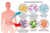 Good and bad bacteria infecting human