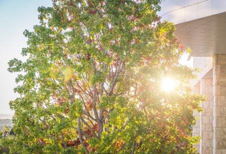 Photo pour Grand arbre à côté d'une façade de bâtiment. contraste entre le contexte naturel et urbain - image libre de droit