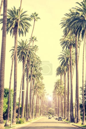 Photo for Beverly Hills street with palme trees at sunset, Los Angeles - Royalty Free Image