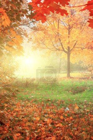 Photo pour Paysage automnal coloré avec des arbres jaunes et des feuilles tombantes, fond naturel - image libre de droit