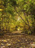 beautiful  colorful tree alley in forest, autumn natural backgro