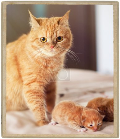 ginger cat with two little kittens