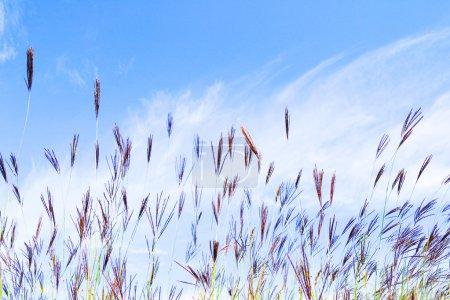 Photo pour Plusieurs gerbes d'herbes sauvages - image libre de droit