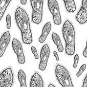 Paramecium of the phylum Ciliophora Vector 1