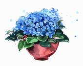 Blue flowers in a pot African violets Spring flowers Watercolor This illustration is a great choice for Wedding Birthday Valentine children book and magazine decoration VECTOR