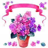 Bouquet of pink Violets