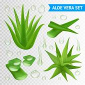 Aloe Vera Plant On Transparent Background