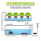 Infographic Hydroponic Illustration