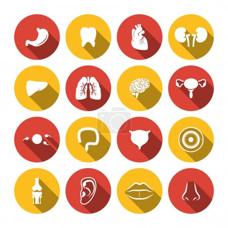 Illustration for Human organs icons set of heart kidney  isolated vector illustration - Royalty Free Image
