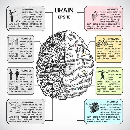 Brain hemispheres sketch infographic