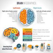 Brain inforgaphics set