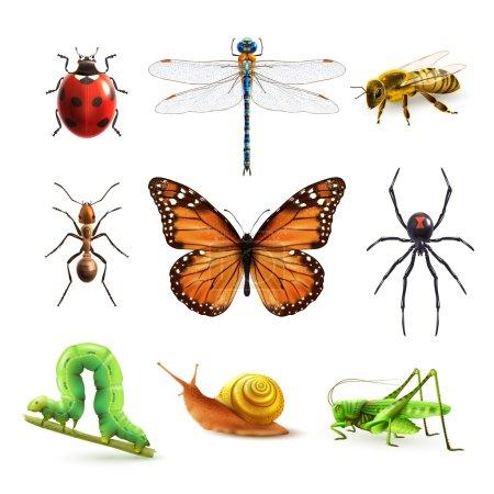 Illustration pour Insectes icônes décoratives colorées réalistes avec illustration vectorielle isolée de guêpe coccinelle - image libre de droit