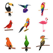 Exotic birds set with toucan parrot and flamingo isolated vector illustration