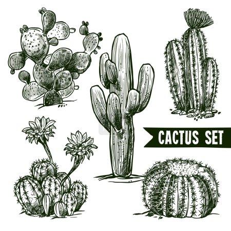 набор эскизов кактуса