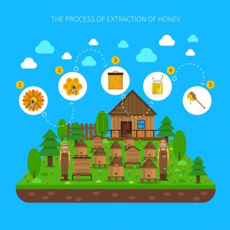 Process Of Honey Extraction Concept