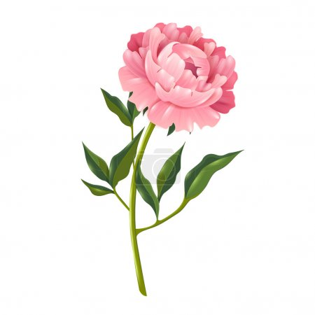 Illustration for Single peony flower with leaves realistic isolated vector illustration for decoration - Royalty Free Image
