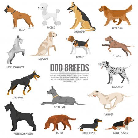 Dogs breed set