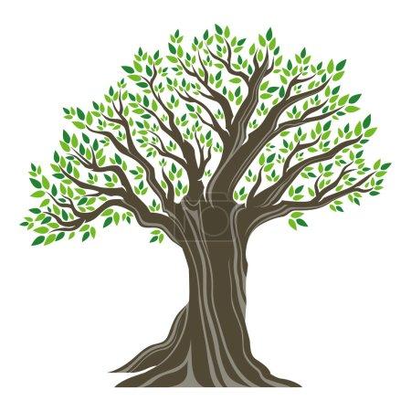 piękne drzewo oliwne