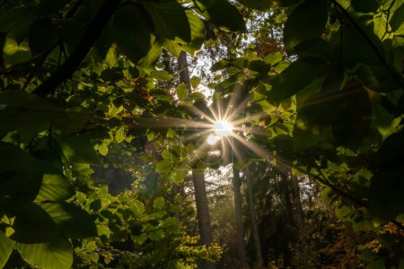 Photo pour De beaux rayons de soleil et des rayons de soleil lumineux à travers des feuilles colorées tôt le matin font du début de la journée une journée heureuse avec l'atmosphère relaxante de l'automne et de l'automne dans les forêts sauvages - image libre de droit