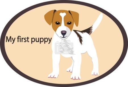 Jack Rassell Puppy