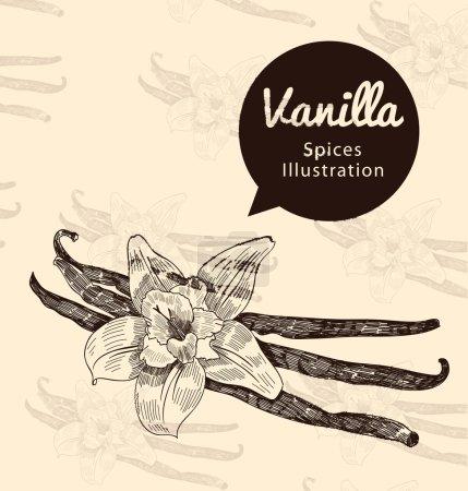 Illustration pour Vanille belles fleurs et haricots sur fond, vecteur - image libre de droit